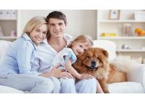 Consejos que debes seguir si deseas tener una mascota en tu hogar