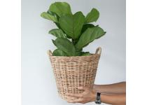 4 plantas de interior para tu hogar