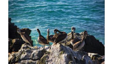 ventajas de vivir en vina del mar