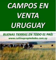 Campos en venta en Uruguay. Uruguay land