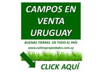 Campos en venta en Uruguay